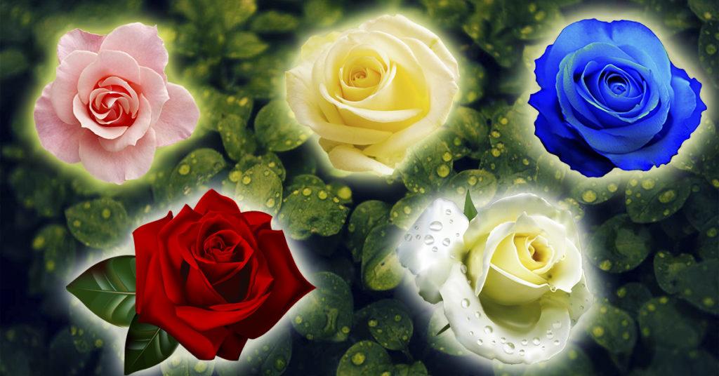 Роза раскроет секрет, когда исполнится ваше желание