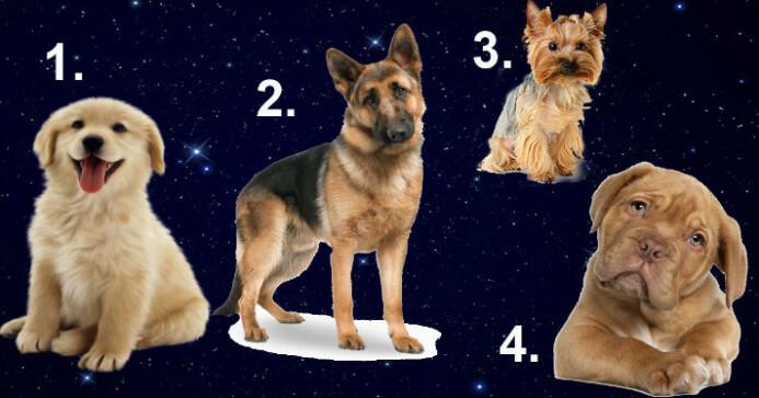 Выберите щенка и узнайте, какой мужчина вам подходит