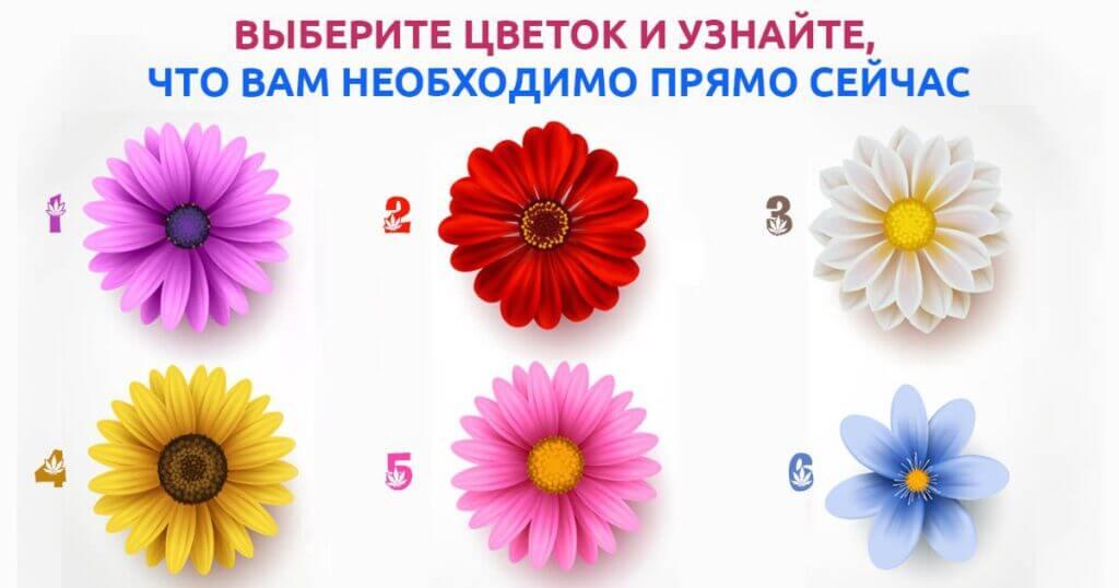 Выберите цветок и узнайте, что вам нужно прямо сейчас