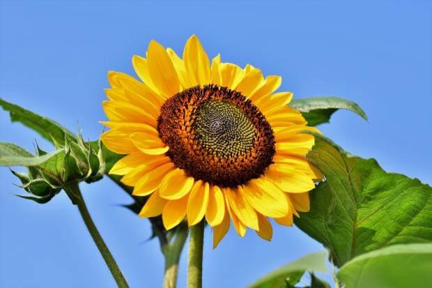 Любимый цветок может многое рассказать о характере женщины